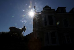 A goat is seen in Llandudno as the spread of the coronavirus disease (COVID-19) continues, Llandudno, Wales, Britain, March 31, 2020. REUTERS/Carl Recine