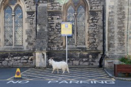 A goat is seen outside a church in Llandudno as the spread of the coronavirus disease (COVID-19) continues, Llandudno, Wales, Britain, March 31, 2020. REUTERS/Carl Recine