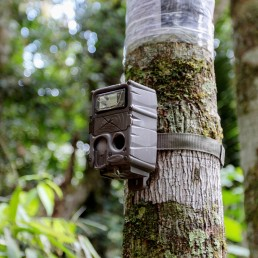 A camera trap installed by workers of the WebConserva Foundation, is seen installed in the trunk of a tree in San Lucas, Colombia February 26, 2020. Picture taken February 26, 2020. REUTERS/Oliver Griffin