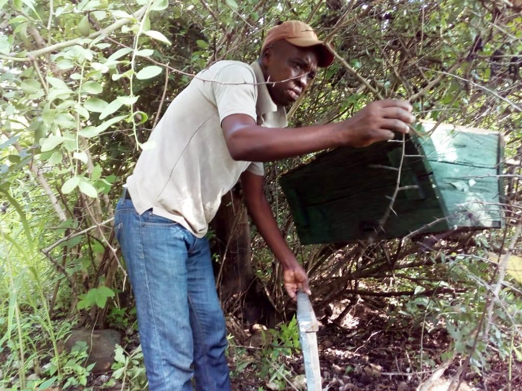 Bweleka Kalambo inspects a beehive in the forest in Karonga district, Malawi, on February 5, 2020. Thomson Reuters Foundation/Charles Pensulo