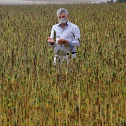 Frederic Roure, founding President of French company Geochanvre poses in a field of hemp at Argenteuil-sur-Armancon, France, September 10, 2020. REUTERS/Charles Platiaiu