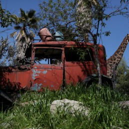 A giraffe is seen next to a vintage car at the 'Buin Zoo' which is looking for sponsors to funds for food, maintenance and veterinary controls for its animals due the lockdown, during the coronavirus disease (COVID-19) outbreak, in Buin, Santiago, Chile September 9, 2020. REUTERS/Ivan Alvarado